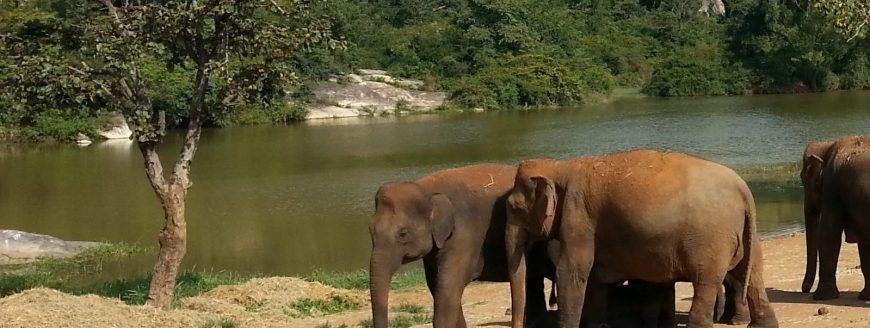 Elephants from Safari Park