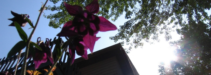 View of Flower and Sun