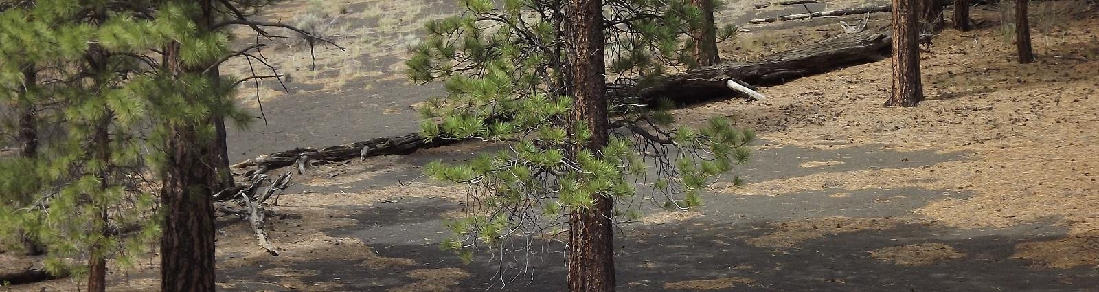 trees-on-hillside