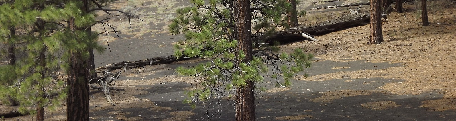 Trees on Hillside
