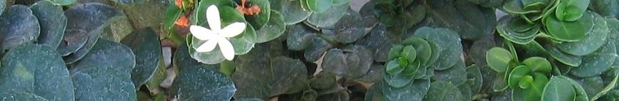 Arid Plants
