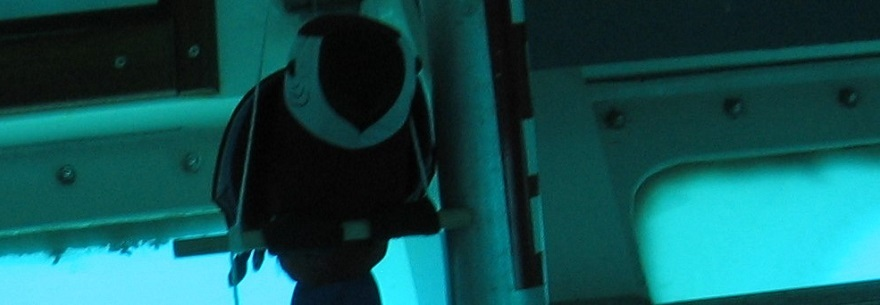 Stuffed Bird in Submarine with Ocean-Filtered Light