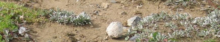Plants in Arid Environment