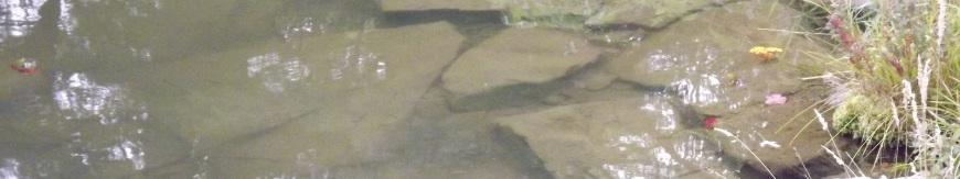 Murky Water
