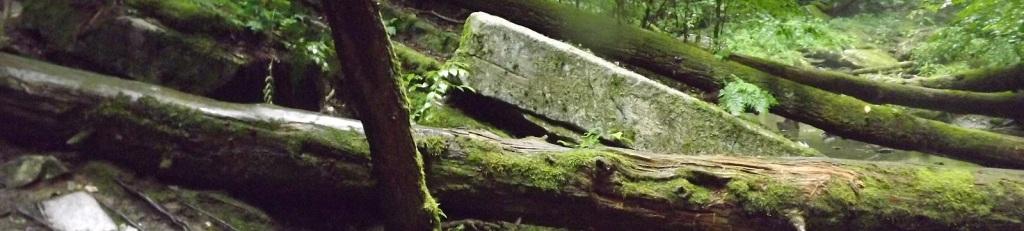 Squarish Rocks and Trees