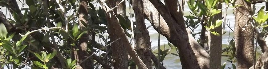 Tree at Manatee Park