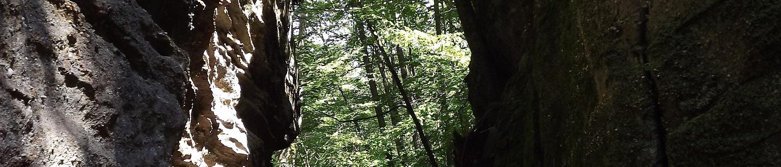 Trees Viewed Through Gap in Rocks