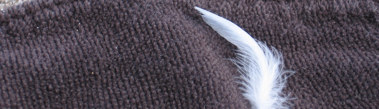 Feather on Fabric